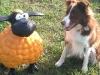 Quiero und Schaf