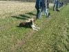 Minirunde (kleine Hunde bis 6kg)